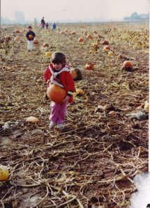 Amy, the littlest of us four, didn't let her size dictate her pumpkin choice.