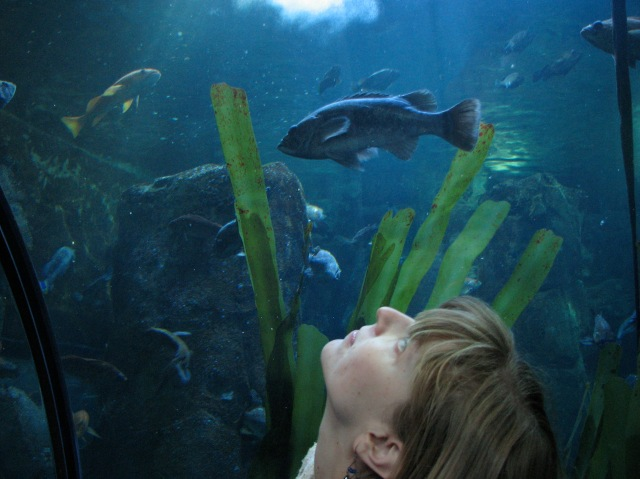 The aquarium has a tunnel that takes you underwater.