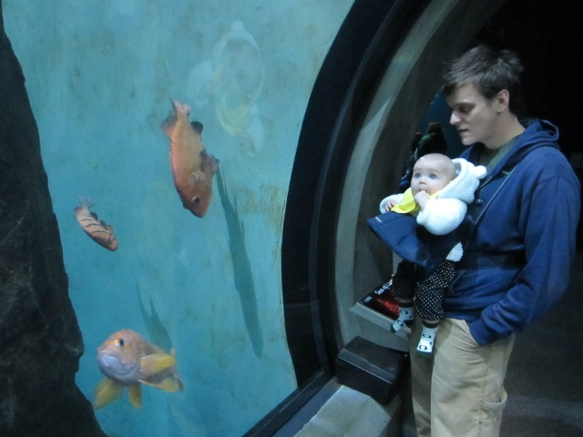 Edith was mesmerized by the fish at the Newport Aquarium.
