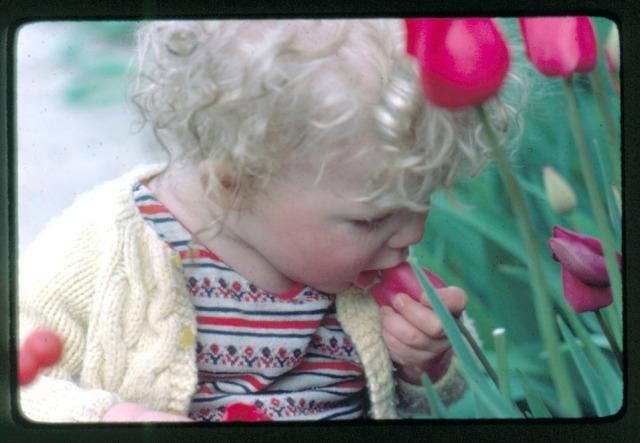 Toddler eat flower tulip