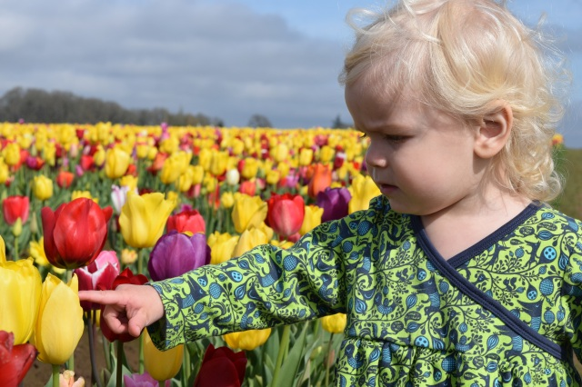 Toddler tulip festival Woodburn curls